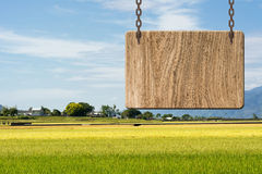 Blank wooden sign. On field of paddy farm. Concept of rural, idyllic, tranquility etc Royalty Free Stock Photos