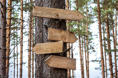 Blank wooden sign pointers. Blank wooden directional signs on tree trunk in forest royalty free stock image