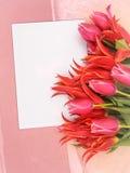 blanka lyckönsknings- blommor Royaltyfri Bild