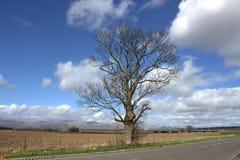 Blanker Baum Stockfoto