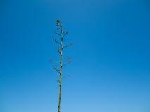 Blanker grüner Baum Lizenzfreie Stockfotografie