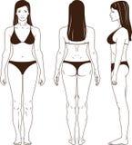 Blanker stehender Frauenvektor Stockbild