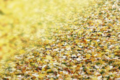 Blanket of autumn yellow leaves and wind background Royalty Free Stock Photos