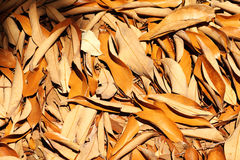Brown dead leaves Royalty Free Stock Images