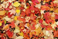 Blanket of leaves Royalty Free Stock Photos
