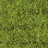 Blanket of moss Stock Image