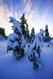 Blanket of Snow Stock Photography