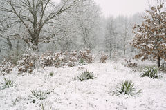 Blanket of snow on forest. Stock Image