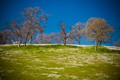 A blanket of wildflowers on hill Royalty Free Stock Image