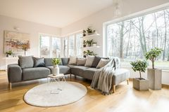 Blankets and cushions on a grey corner sofa standing in white li. Ving room interior with fresh plants, big window and abstract painting stock images