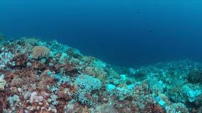 Blanqueo coralino metrajes