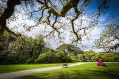 The blarney castle park 1 Royalty Free Stock Photo