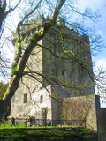 Blarney castle. With tree in front Stock Photography