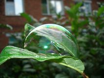 Blase auf Blatt nach Regen stockbild