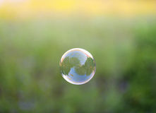 Blase mit Lavendelanlagen im Hintergrund Stockbild