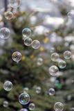 Blasen, die mit immergrünem Baumhintergrund schwimmen stockbilder
