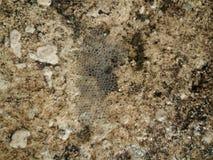 Blasen in einem Muster auf dem Beton Stockfotografie