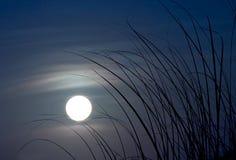 blask księżyca Fotografia Royalty Free