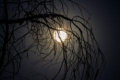 Blask księżyca błyszczy jaskrawy przez nieżywych gałąź fotografia stock