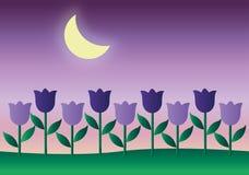 Blask księżyca na tulipanach Fotografia Royalty Free