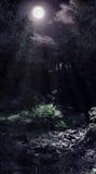 Blask księżyca w drewnach fotografia stock