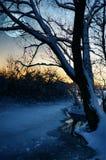 blask księżyca zima zdjęcie royalty free