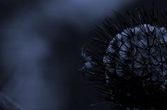 Blasku księżyca pająk Obraz Royalty Free