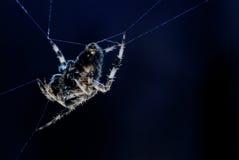 Blasku księżyca pająk od strony Zdjęcia Royalty Free