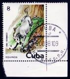 Blasses Pferd, das hinunter eine Klippenwand, circa 1981 taucht Lizenzfreie Stockfotos