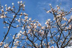 Blassoms auf dem Zweigbaum stockfotos