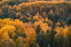 Blast av att gulna träd i uteslutande royaltyfria foton