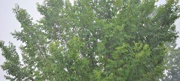 Blast av gröna träd i regn arkivfoton