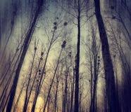 Blast av nakna träd i morgonen Arkivfoton