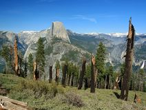 Blast Radius. Group of struck down trees, Panorama trail, yosemite national park, california Royalty Free Stock Images