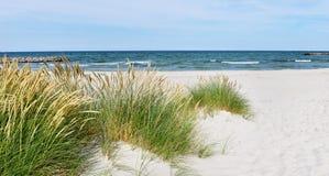 Baltic Sea Beach - Panorama. With Sea Grass stock photos