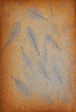 Blatmuster auf dem Kratzerweinlesehintergrund Stockbilder