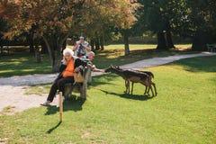 Blatna, republika czech, Wrzesień 27, 2017: Starsi ludzi karmią ręka rogaczem w parku obok kasztelu Blatna Zdjęcia Stock
