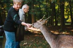 Blatna, republika czech, Wrzesień 27, 2017: Starsi ludzi karmią ręka rogaczem w parku obok kasztelu Blatna Zdjęcie Stock