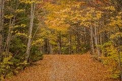 Blatt-Abdeckungs-schmale Straße durch Wald im Herbst Stockbilder