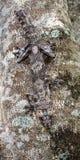 Blatt-angebundener Gecko stockfotografie