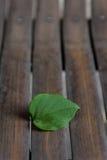 Blatt auf Bambus Stockfotografie