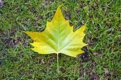 Blatt auf dem Gras Lizenzfreies Stockbild