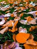 Blatt auf dem Gras stockfoto