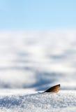 Blatt auf dem Schnee Lizenzfreie Stockbilder