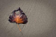 Blatt auf dem Strand Stockbild