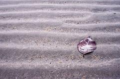 Blatt auf dem Strand Stockfotografie
