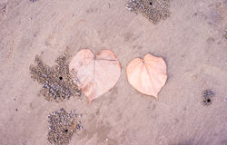 Blatt auf dem Strand Lizenzfreies Stockfoto