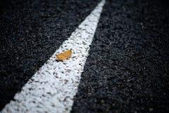 Blatt auf der Straße Stockfotos