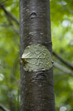 Blatt auf einem Baumkabel Lizenzfreies Stockbild