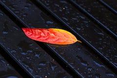 Blatt auf einer nassen schwarzen Bank Stockfotos